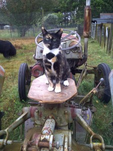 Mitzy on the tractor