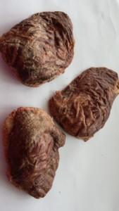Ovine spleen size