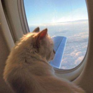 Cat-plane-large
