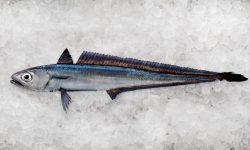 Hoki Fish from New Zealand