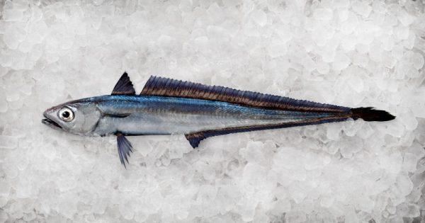 Hoki Fish from New Zealand