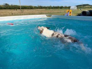 Coast Newflands Dog Park Pool Floating Bama Stick