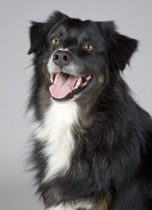 Training tips for happy dogs