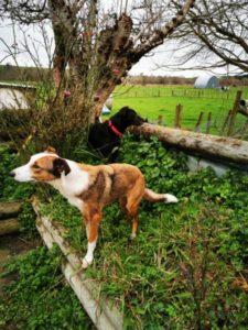 dog on raised garden